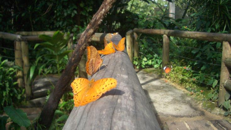 See the incredible butterflies up close in Kuranda