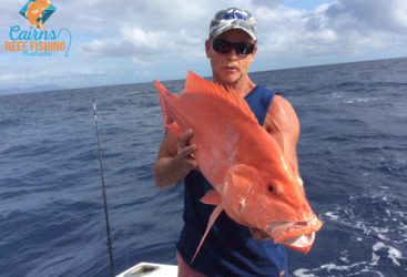 Crimson Snapper Reef Fish-Great Barrier Reef fishing tour