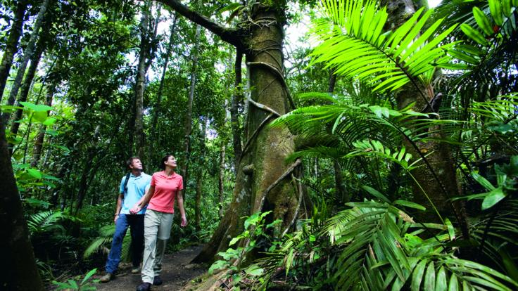 Daintree Rainforest Tours, Amazing trees and wildlife