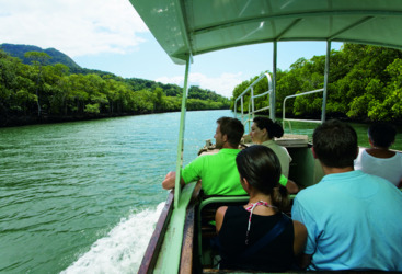 Mighty Daintree River cruise