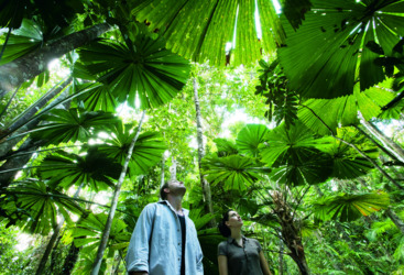 World Heritage rainforests, Daintree