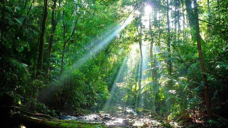 Discover the magical Daintree Rainforest
