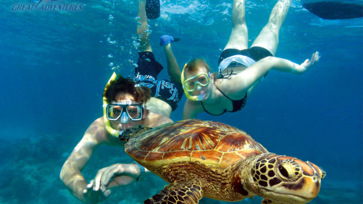 Swimming with turtles, Green Island