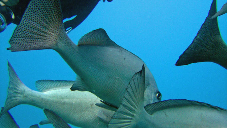 Get right up close and personal with the fish on your PADI course - Great Barrier Reef