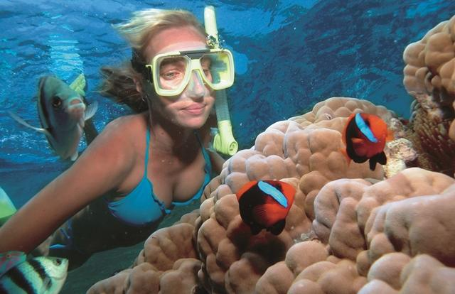 Snorkel Port Douglas- Great Barrier Reef tour