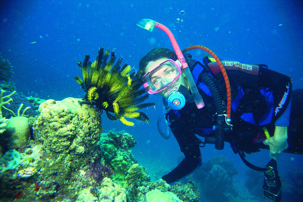 Great barrier reef tour learn to scuba dive 5 day padi dive great barrier reef - Best place to dive the great barrier reef ...