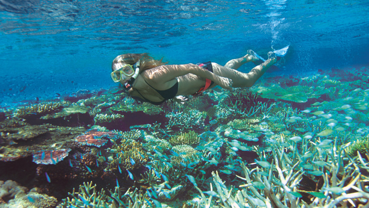 Snorkel on Agincourt and Ribbon reefs - Outer Reef Locations from Port Douglas
