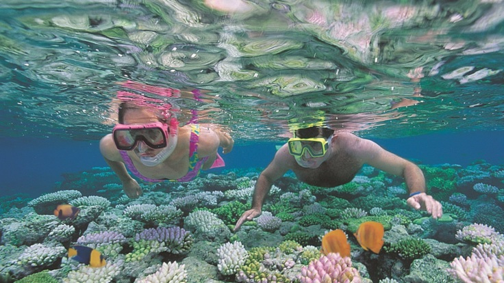 Port Douglas Snorkel tour on the Great Barrier Reef in Australia