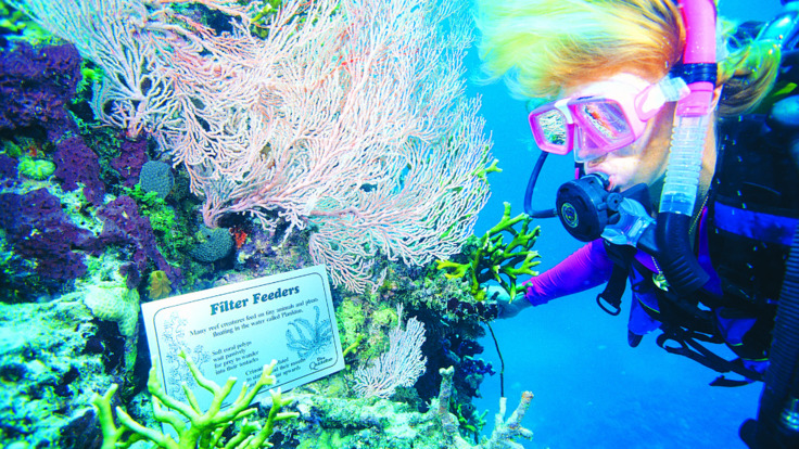 Learn about the reef whilst scuba diving