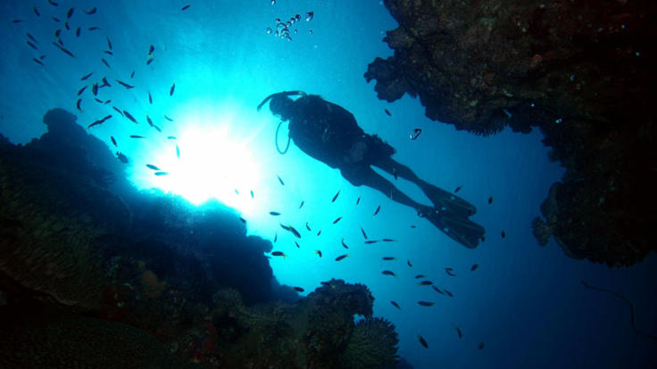 Explore the reef with a scuba dive