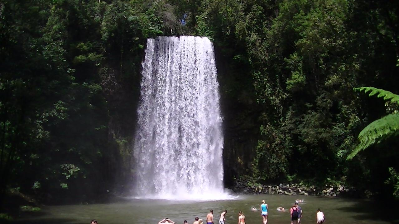 Millaa Millaa Falls, Cairns, Australia - Eat your heart ... |Cairns Australia Waterfalls