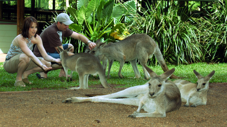 Hand feed Kangaroos & Wallabies