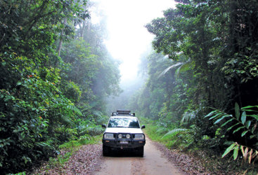 Rainforest track on the Atherton Tablelands