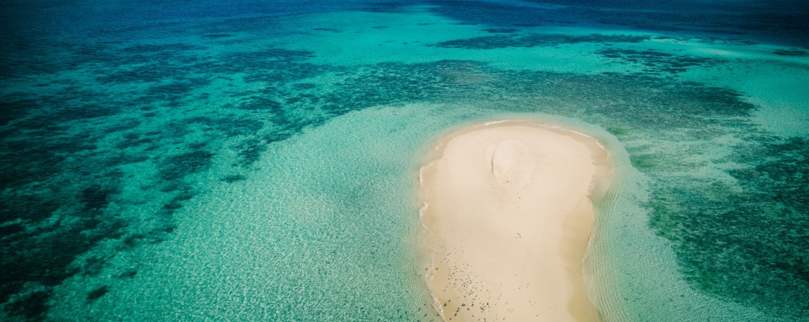 an overview of the coral reefs Coral reefs are built by millions of coral polyps,  scientists active in the global coral reef alliance (gcra) grow coral reefs and will even show others the.