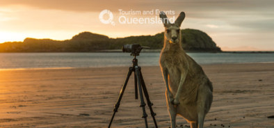 Take a picture with me? Kangaroo at Cape Hillsborough