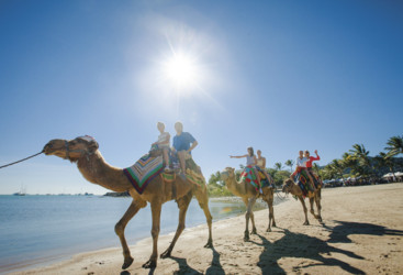 Camel rides, Airlie Beach, Whitsundays