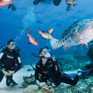 The Best Place To Scuba Dive - Great Barrier Reef Australia